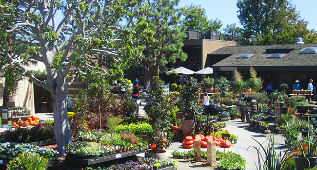 The Rest Of Rogeru0027s Gardens Is Just As Spectacular. There Is A Wide Variety  Of Plants, Landscaping Materials, And Both Garden And Home Accessories.